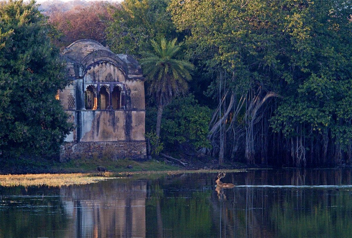 Taman Nasional Ranthambore | Foto: Lonely Planet