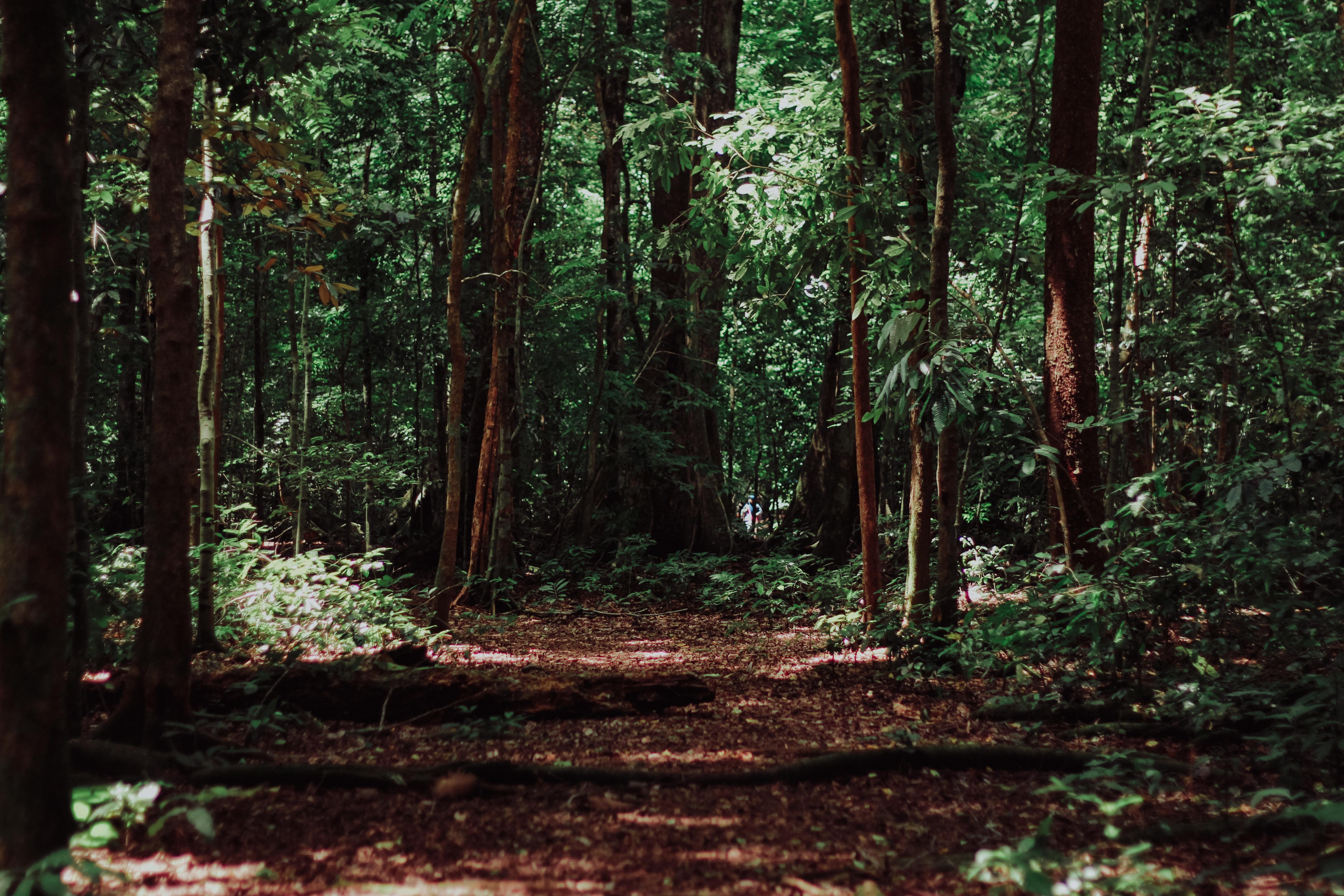 Barisan pepohonan di hutan | Foto: Imat Bagja Gumilar/Unsplash