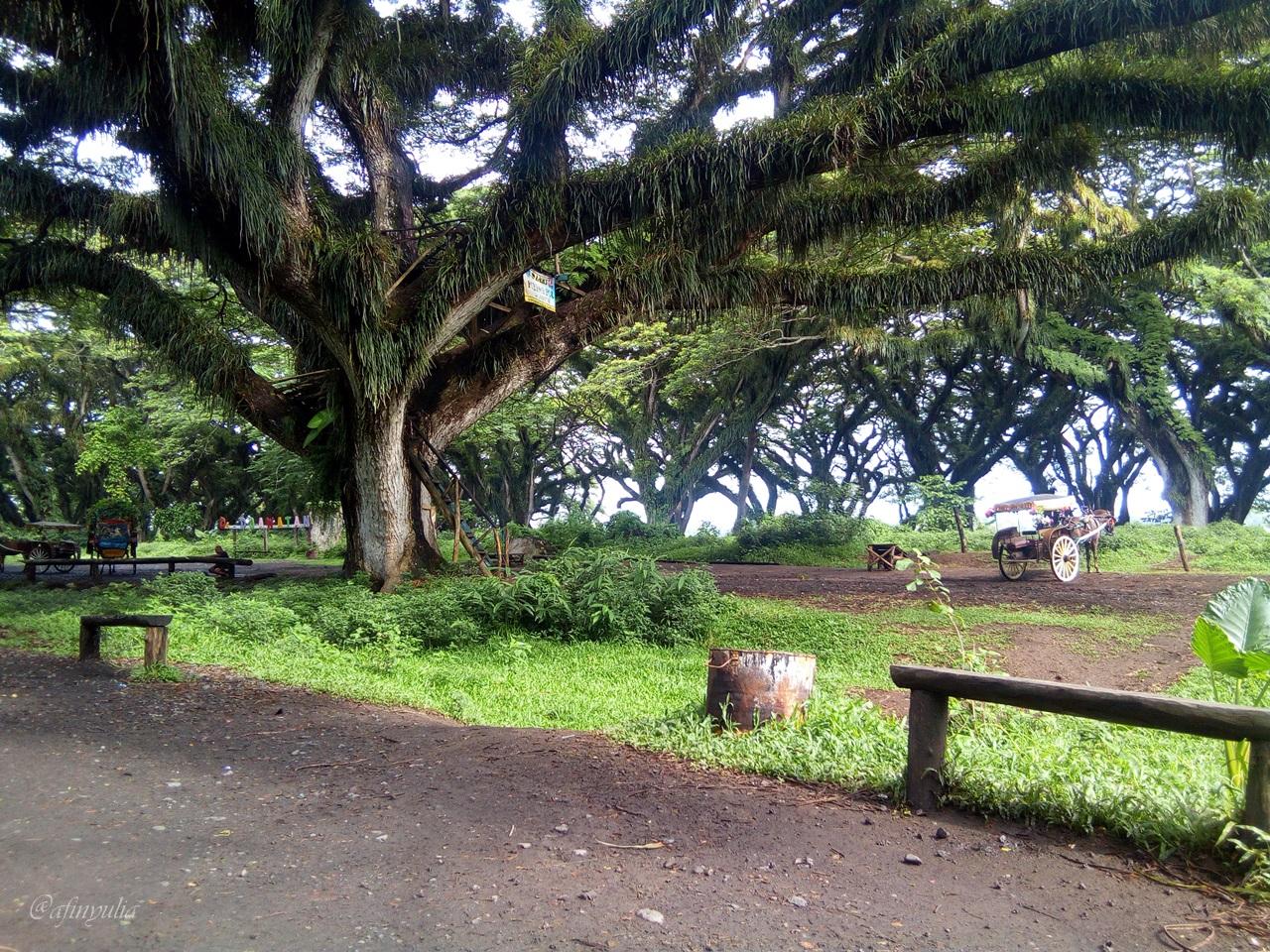 Hutan Djawatan