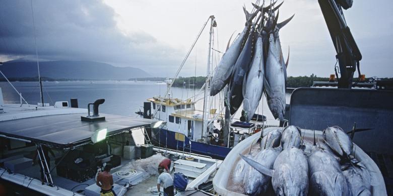 Ilustrasi Ekspor Perikanan | Sumber dok: Ekonomi Kompas