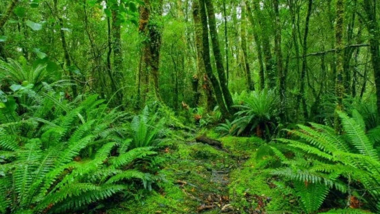 Hutan di Sumatera Selatan Disebut Sebagai Tempat Ditemukannya Spesies Baru Katak Tersebut