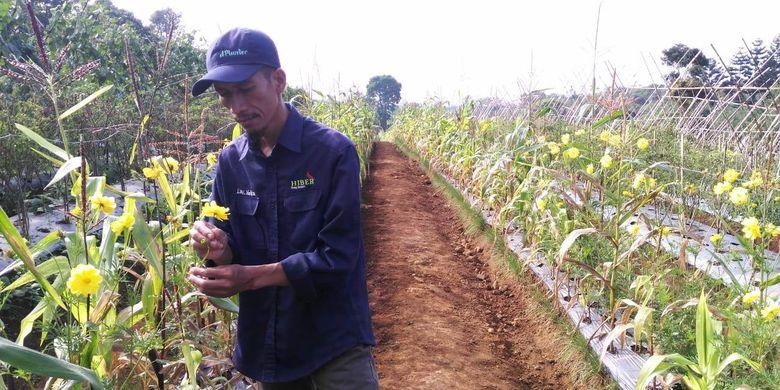 Luki Lukmanulhakim di kebun tempatnya melakukan rekayasa genetik pada jagungnya | foto: kompas.com