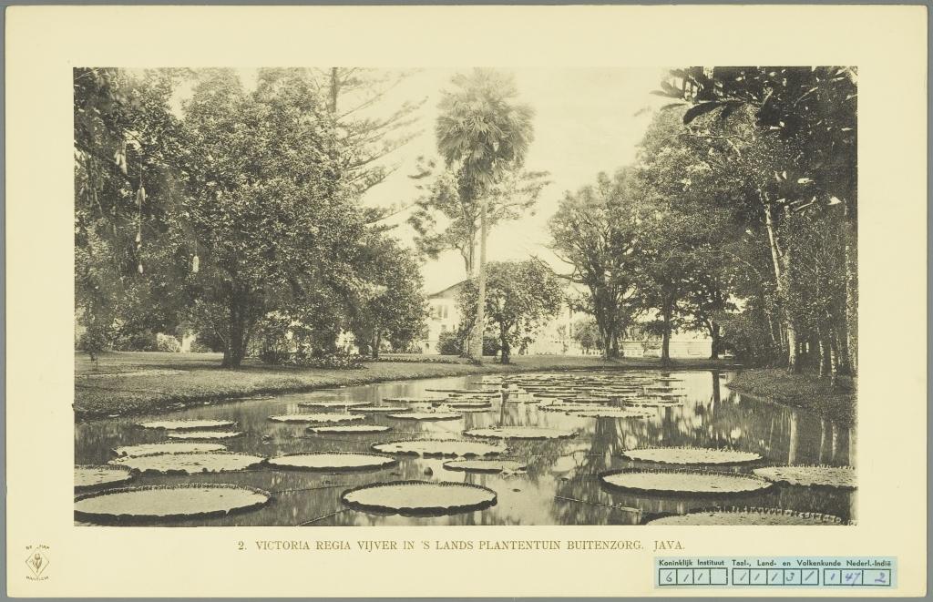 Salah satu ikon flora yang menarik dari Kebun Raya Bogor adalah taman teratai yang berada di depan gedung istana (foto: .hortusleiden.nl)