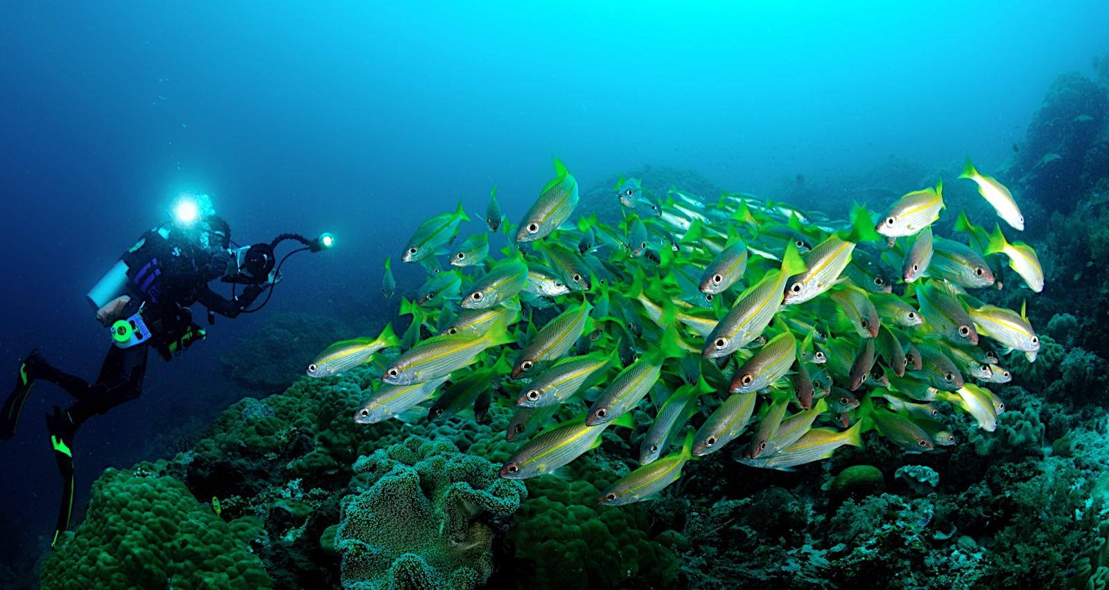 Kawasan perairan Raja Ampat menjadi favorit para penyelam dan peneliti di seluruh dunia