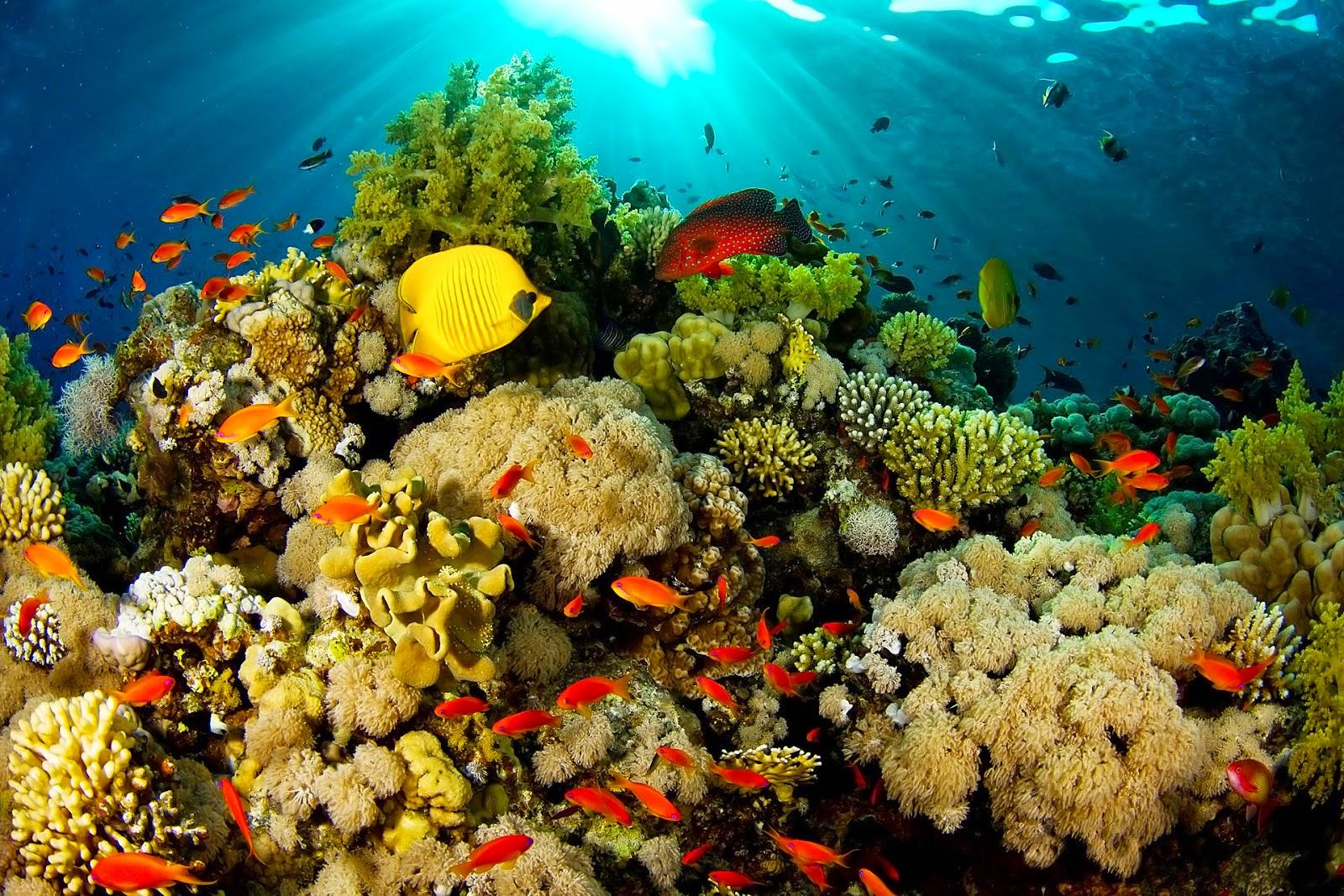 Kekayaan laut Raja Ampat | Sumber: Good News From Indonesia
