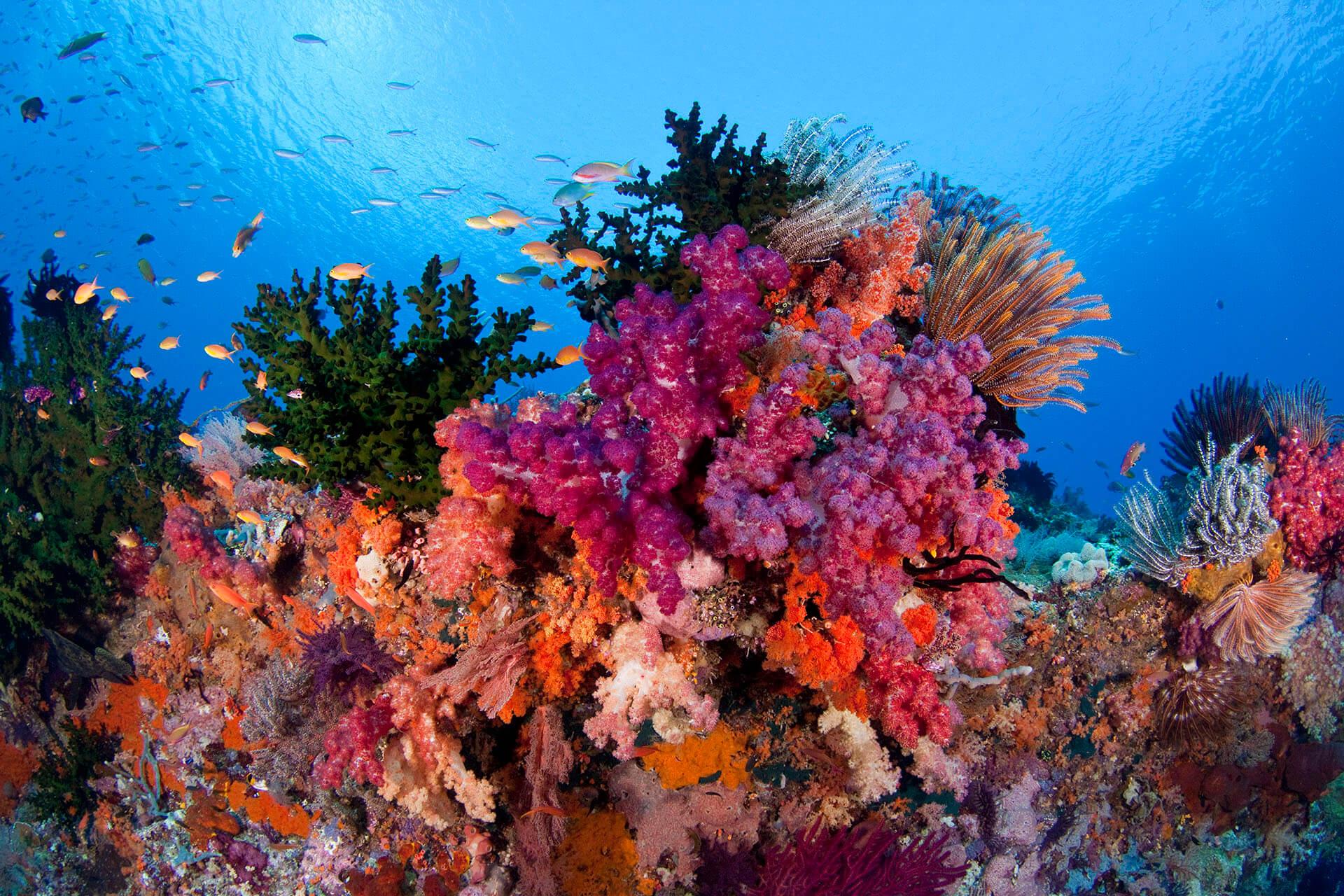 Terumbu karang, ikan kecil dan besar yang indah, penyu, hingga barakuda bisa ditemukan di bawah laut Raja Ampat