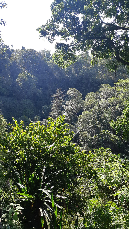 Pemandangan yang menemanin anda selama rute trekking menuju Air Terjun Banyumala
