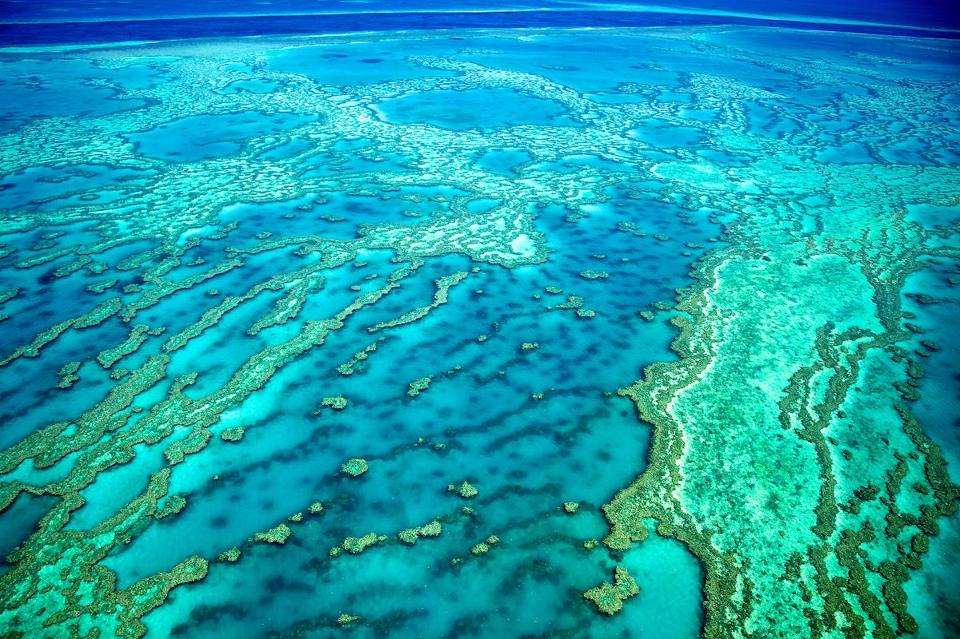 Hamparan karang nan luas tampak udara (Foto: iStock via Forbes)