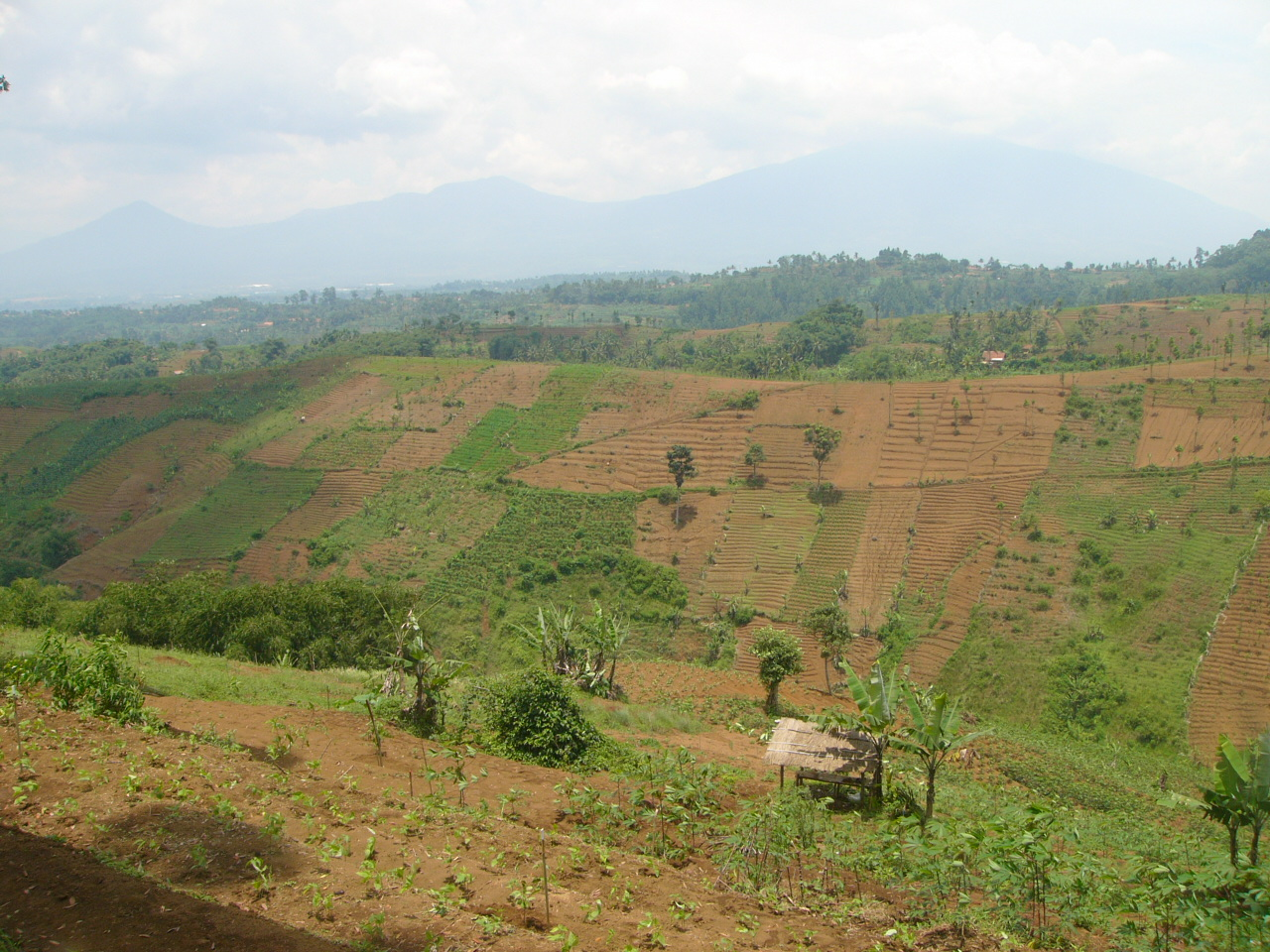 Kawasan TNGGP yang terdegradasi di tahun 2008 (Foto: CI Indonesia)