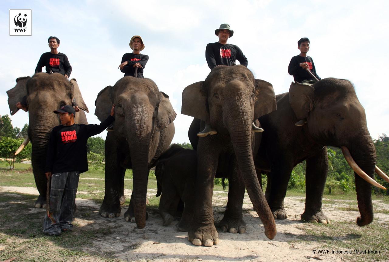 Tim Elephant Flying Squad (Foto: WWF Indonesia)