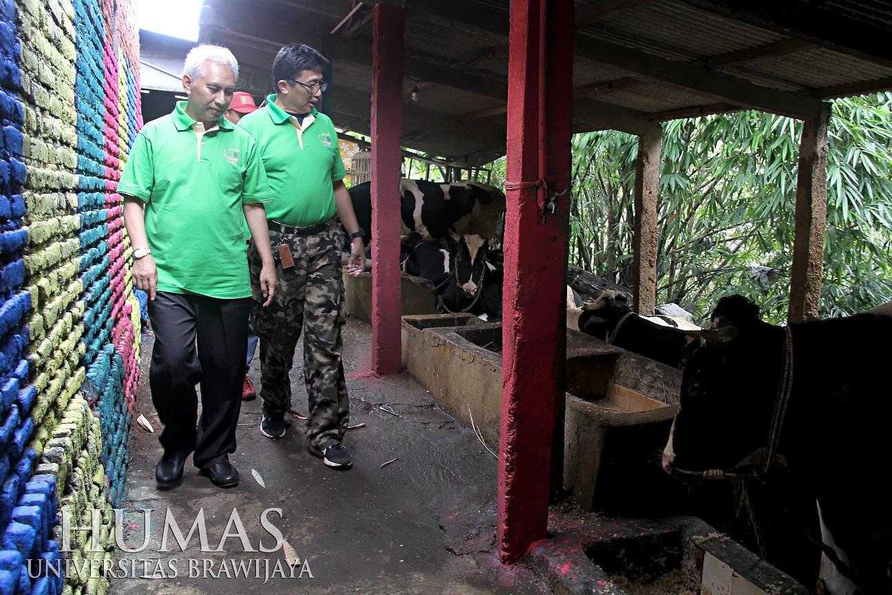 Peninjauan kandang-kandang sapi oleh Rektor (Foto: Humas UB)