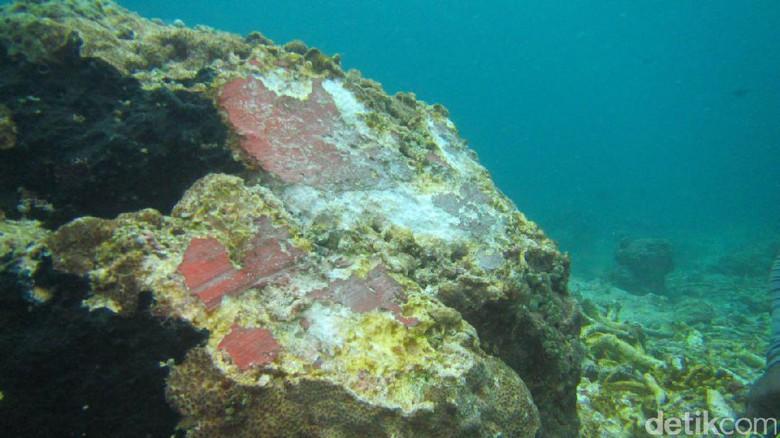Terumbu karang rusak akibat tabrakan kapal (foto: detik)