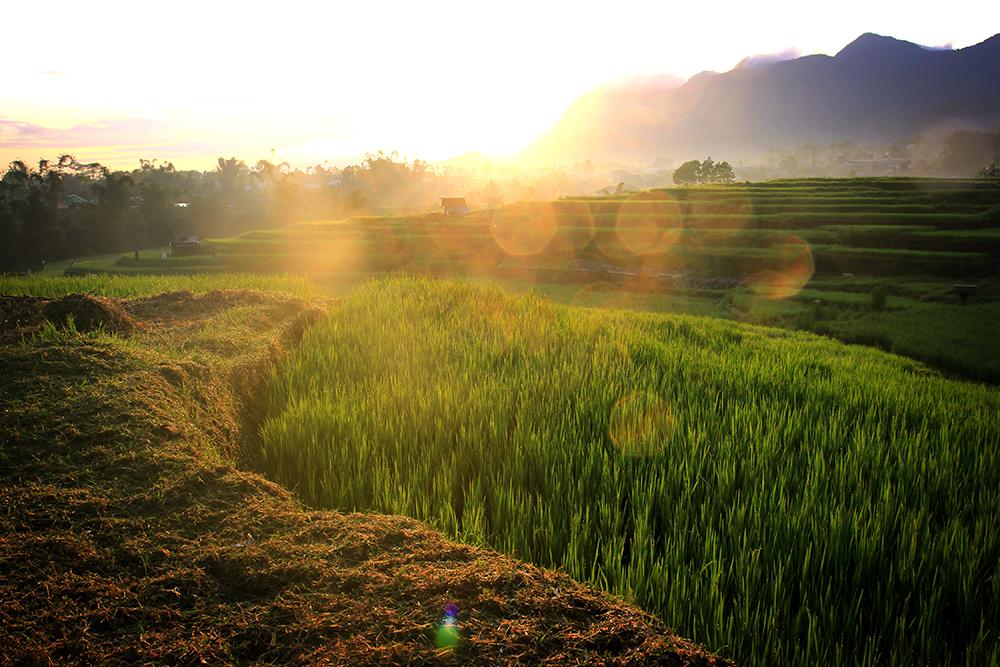 Sunrise di Persawahan Karot Ruteng  © Boy Torkis Simarmata