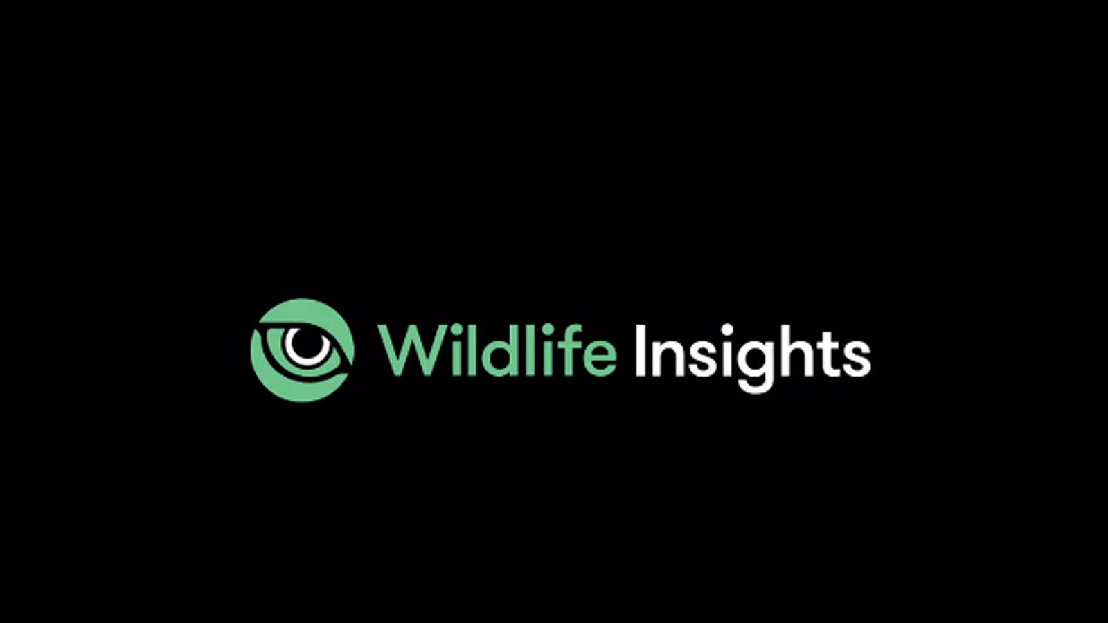 Wildlife berteknologi AI | Foto: Youtube Google Earth