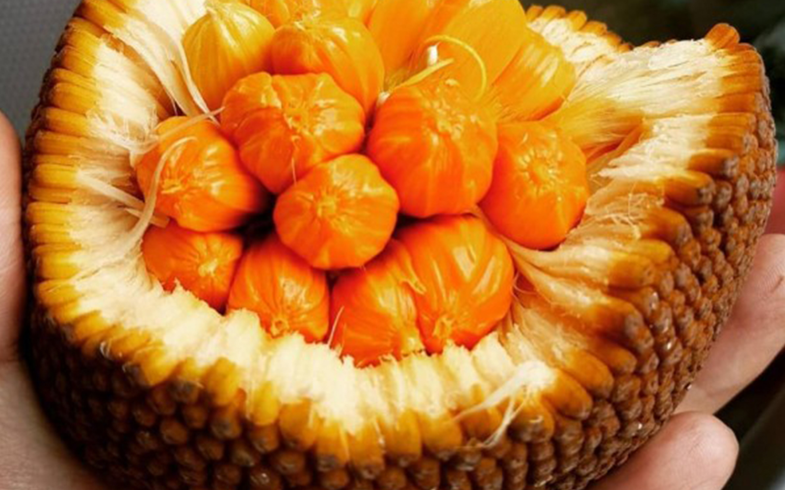 Buah keledang | Foto: idntimes.com