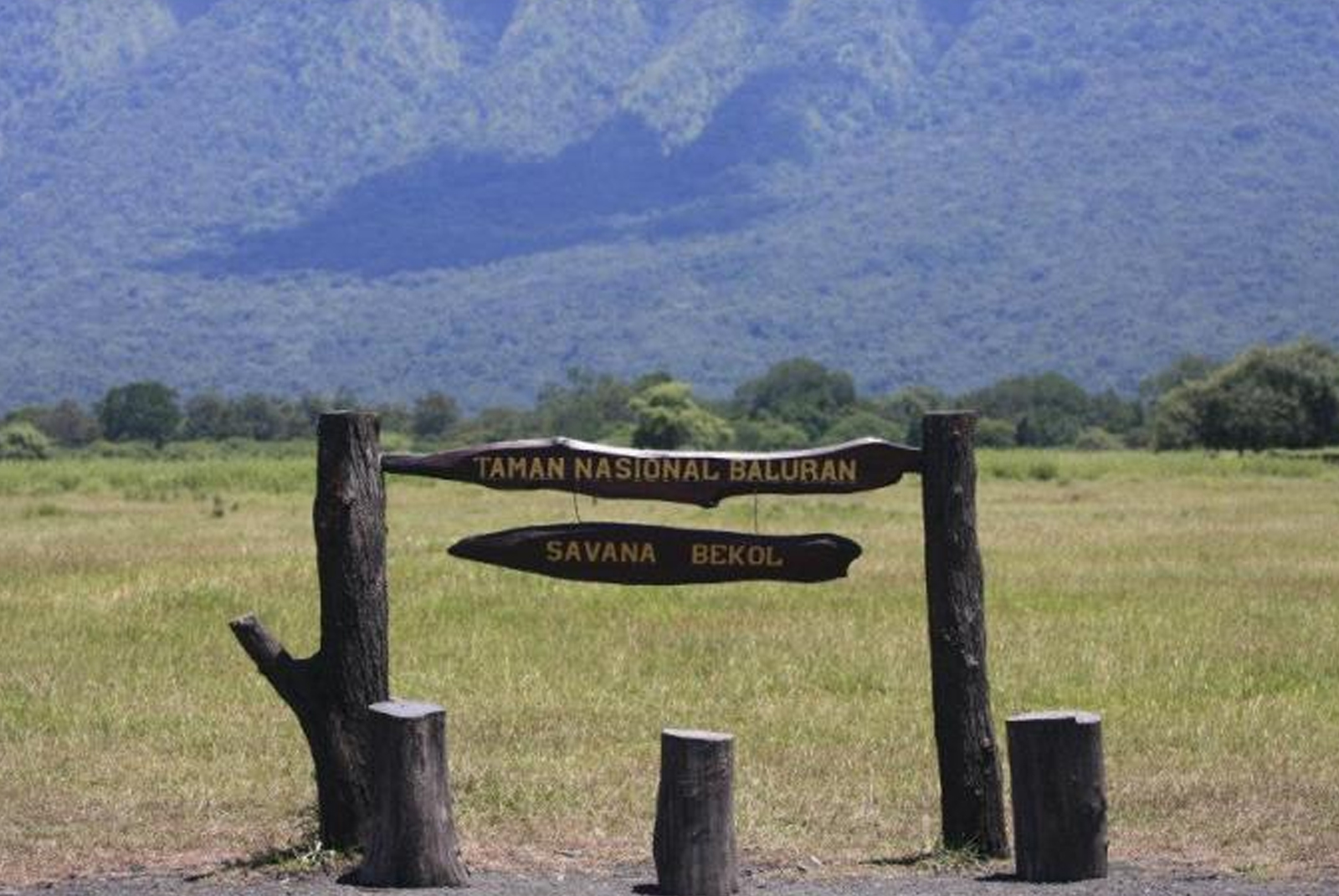 Savana Bekol di Taman Nasional Bularan | onyjamhari/kompasiana.com