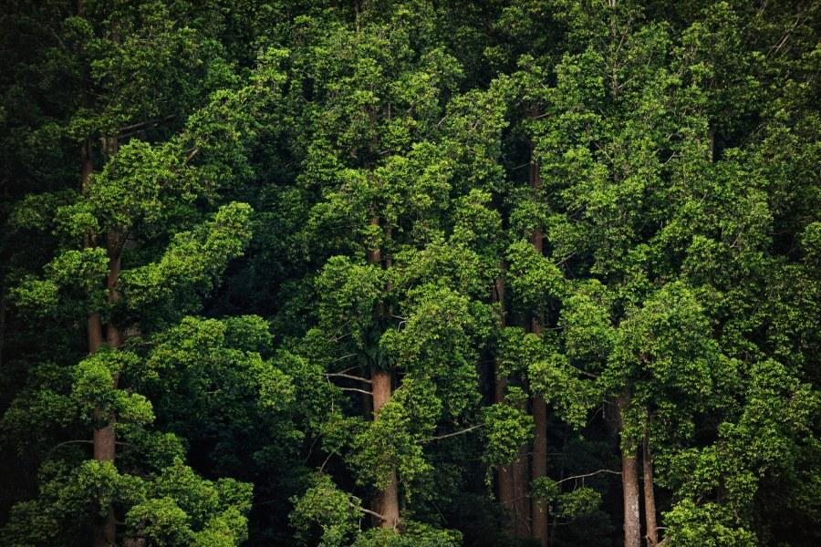 Luas Hutan Indonesia Akan Bertambah Jika Penerapan Daur Ulang Kertas Berhasil
