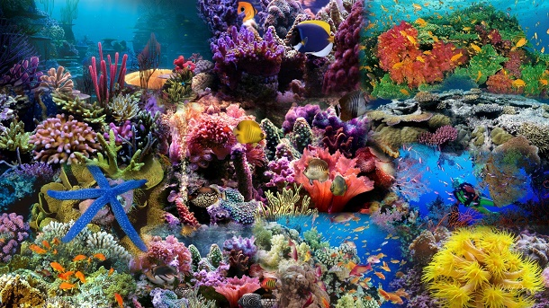 Photo alam bawah laut Indonesia. Sumber:  ashilanurulhuda.blogspot.com