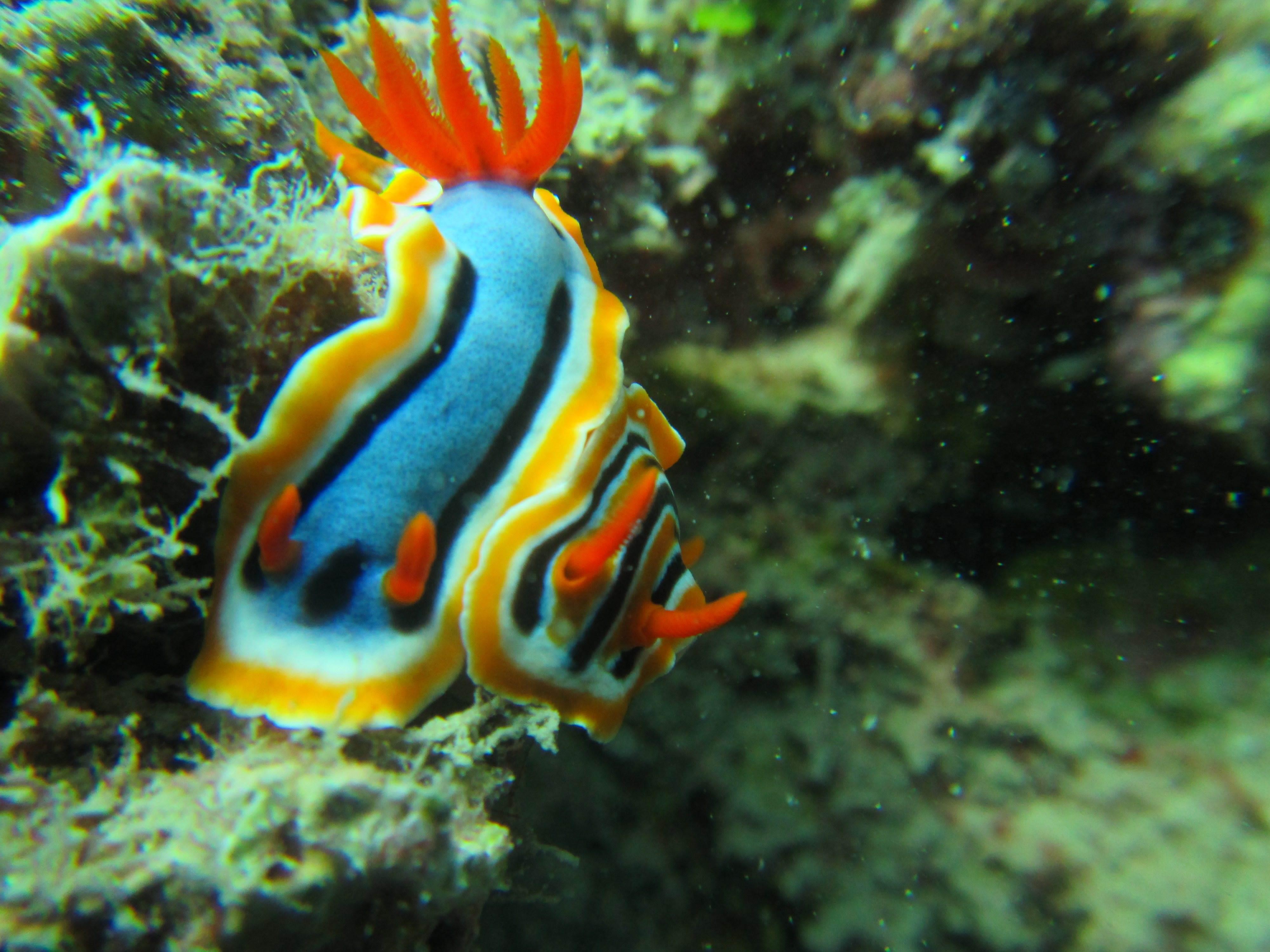 Benthos pada ekosistem terumbu karang