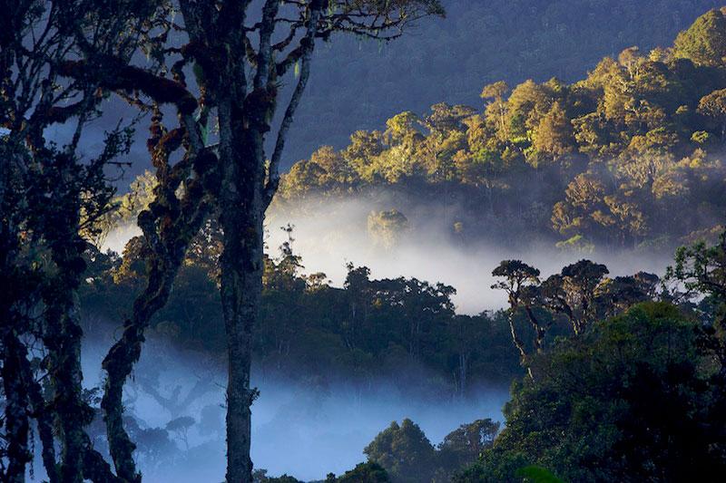 Kabut menyelimuti Gunung Palung, Sumber: media.travyde.com