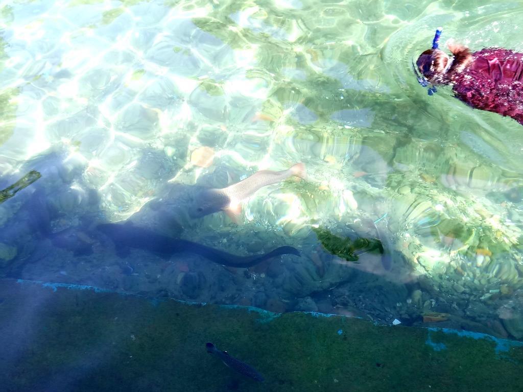 berenang bersama morea dan ikan @giska