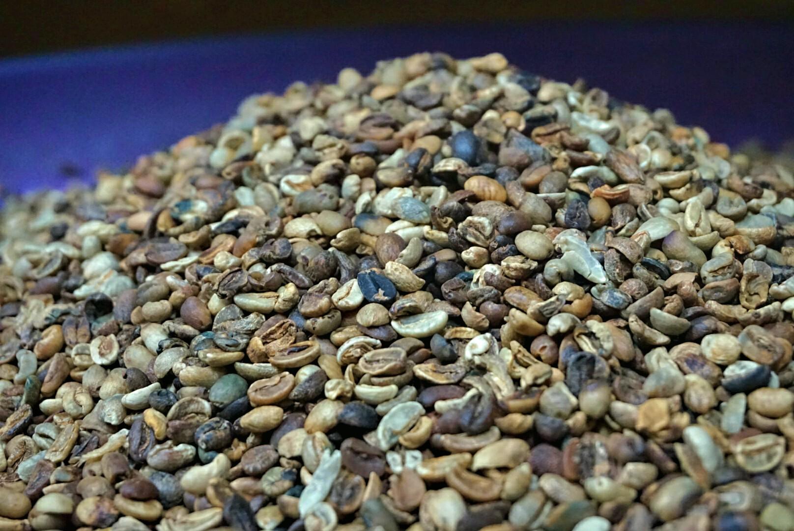 Bijih Kopi Arabika yang digunakan untuk Kopi Amungme (Foto: Bagus DR / GNFI)