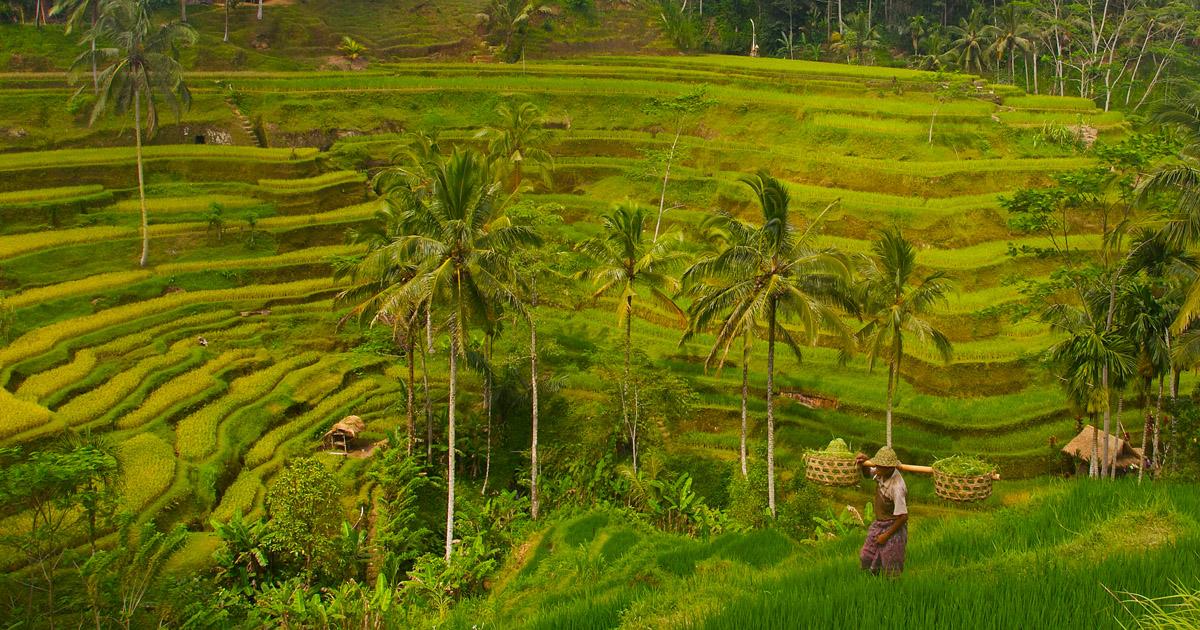 Hijaunya alam Ubud, Bali (Dave Marshall)