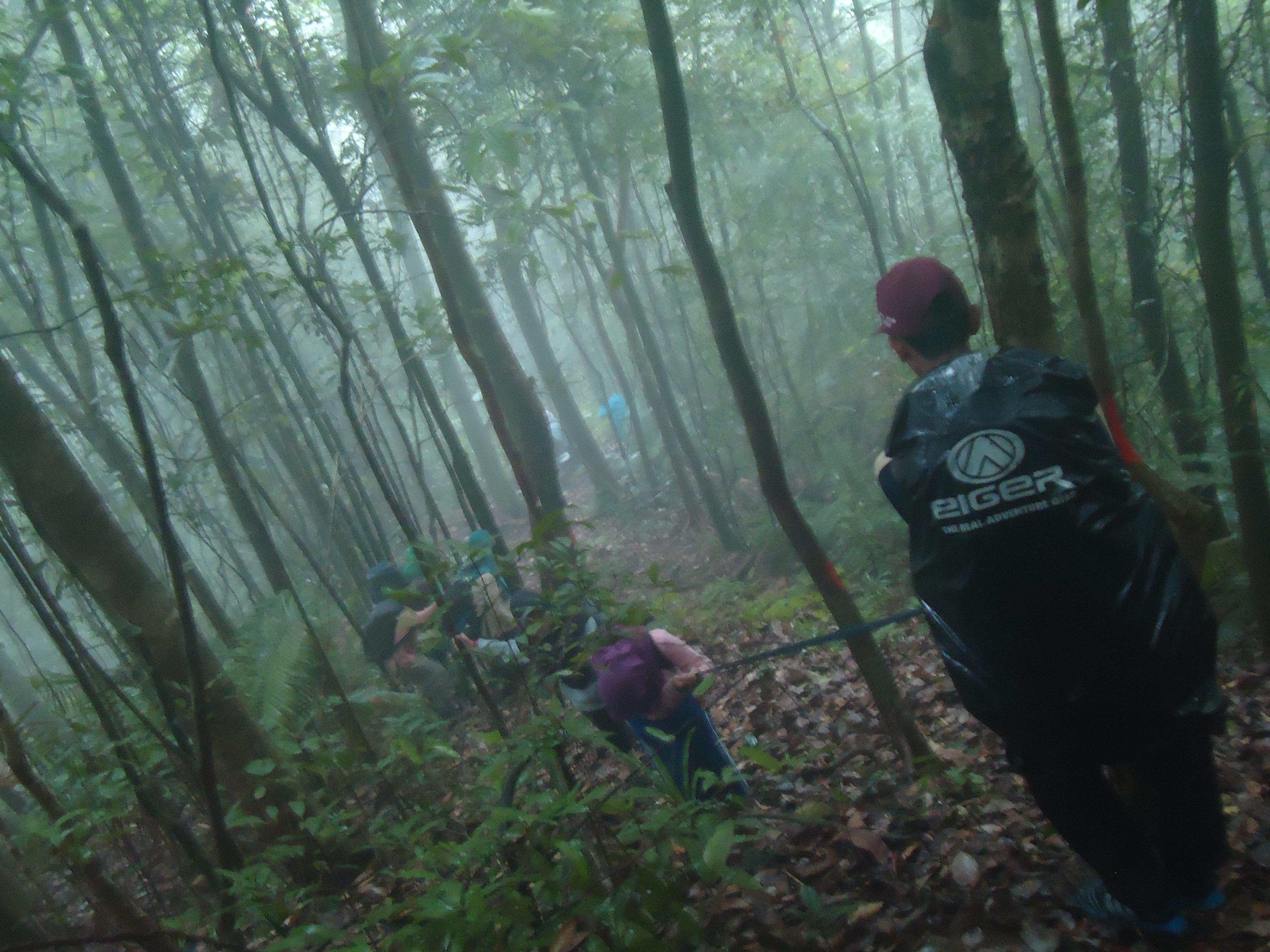 Kelompok kami menyusuri hutan Tanjung Datu sepanjang garis batas untuk menyapa keragaman hayatinya. (c) Iftitah Sari/ Tim KKN UGM KTB-01 2014