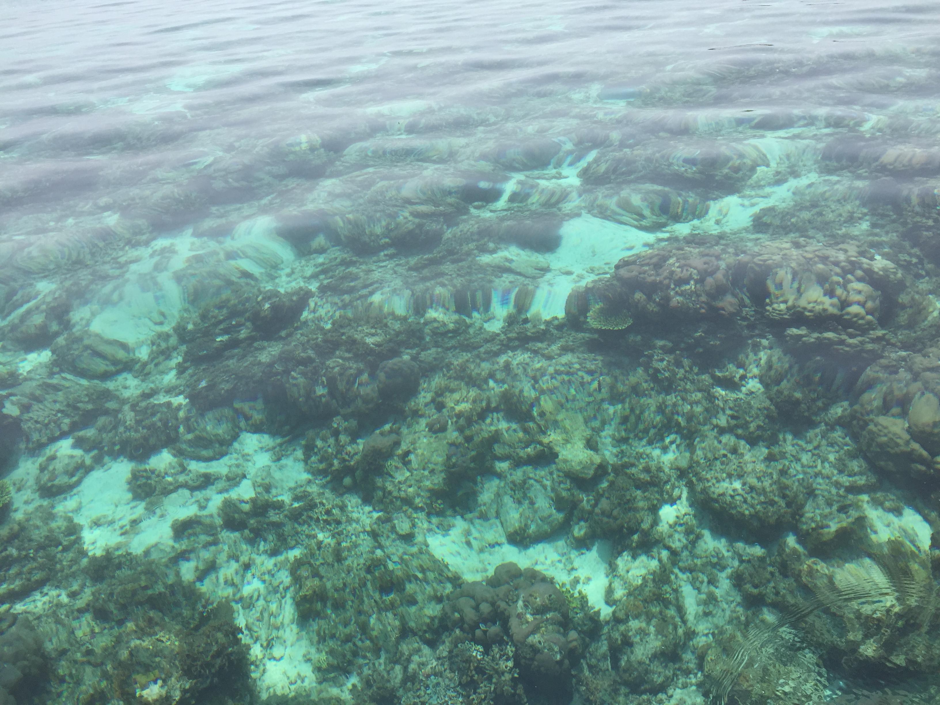 Hamparan karang di perairan jernih Sagori