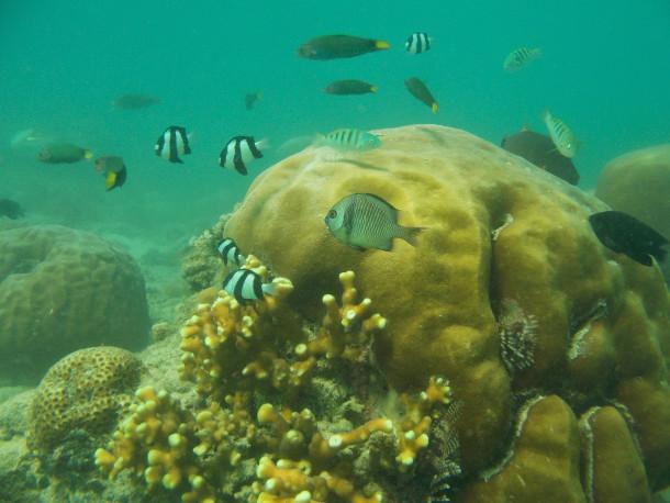 Alam bawah laut Gili Nanggu