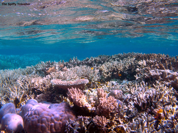 Keindahan bawah laut Bomba Atoll