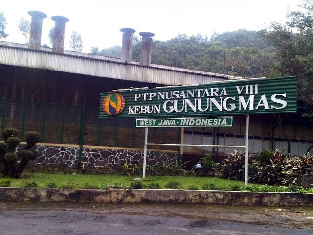 PTP Nusantara VIII | Sumber: Indeksberita.com