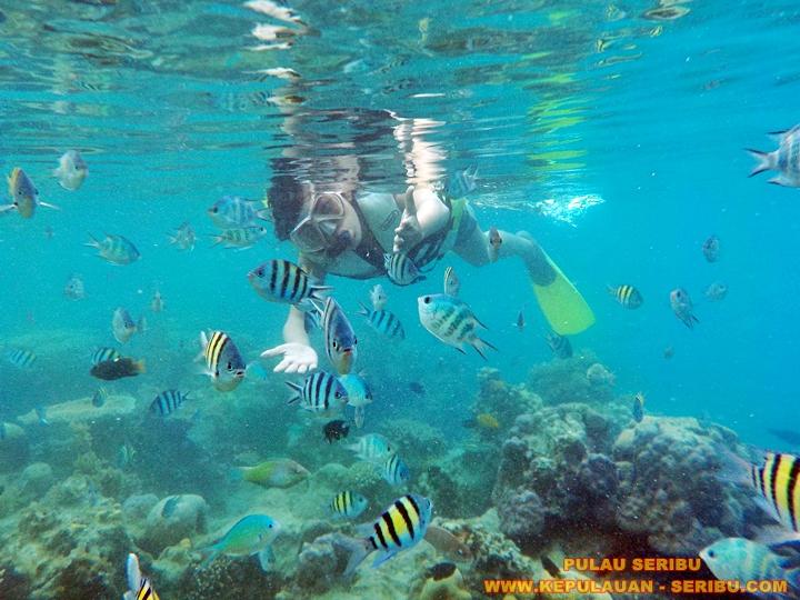 Obyek Wisata Snorkeling Di Pulau Seribu