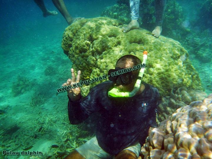 Snorkeling di Pulau Dolphin Pulau Seribu