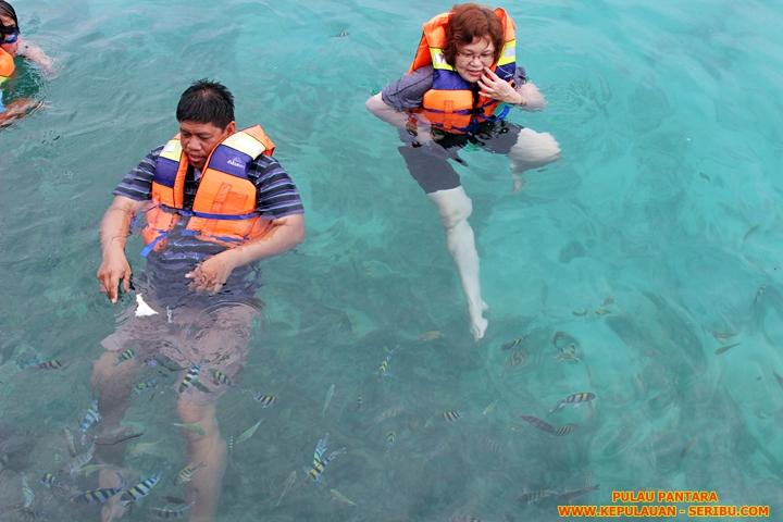 Snorkeling Di Pulau Pantara Resort Wisata Pulau Seribu Jakarta