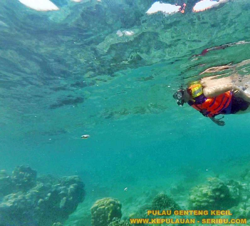 Snorkeling Di Pulau Genteng Kecil Wisata Pulau Seribu