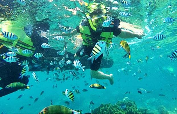 Snorkeling Di Pulau Macan Wisata Pulau Seribu