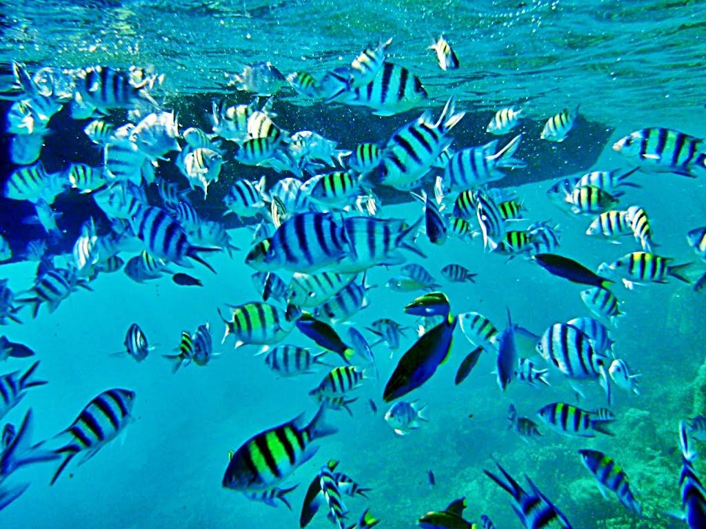 Snorkeling Pulau Pramuka Wisata Pulau Seribu