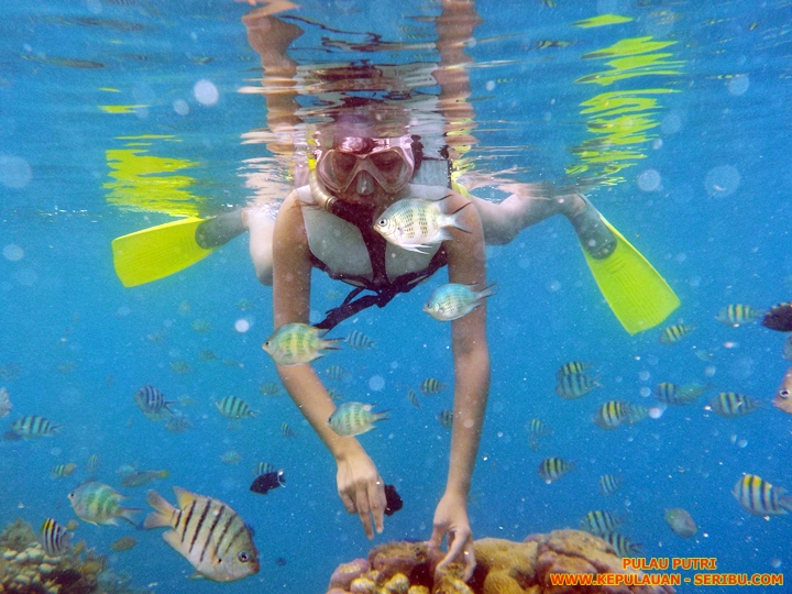 Snorkeling Di Pulau Putri Resort Wisata Kepulauan Seribu