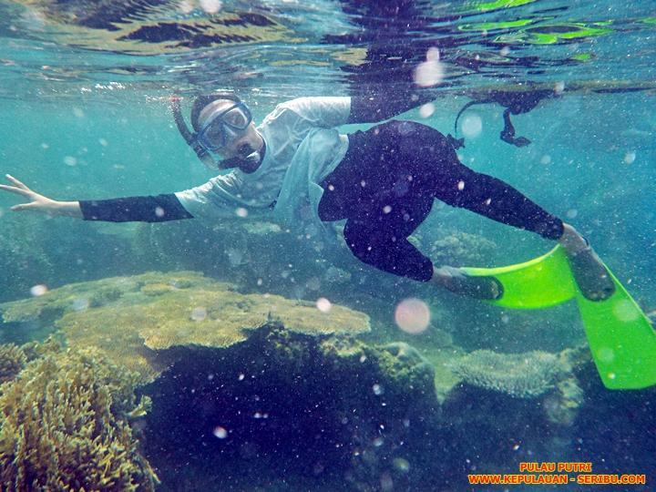 Terumbu Karang Di Pulau Putri Wisata Kepulauan Seribu