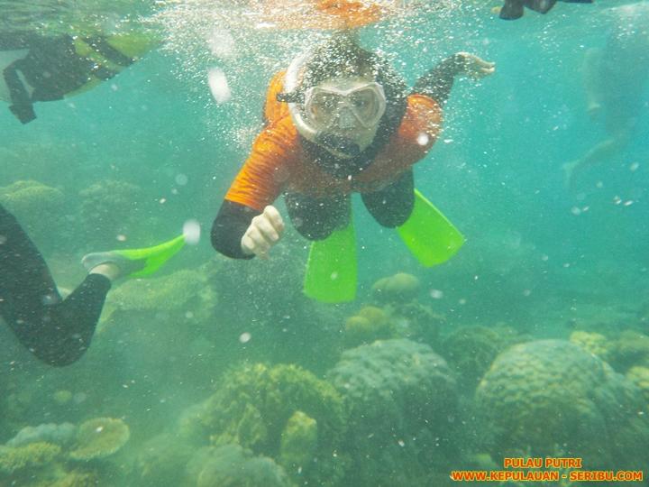 Snorkeling Di Pulau Putri Resort Wisata Pulau Seribu