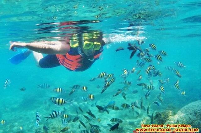Snorkeling Di Pulau Royal Island Resort Pulau Kelapa