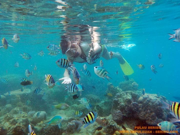 Snorkeling Pulau Seribu Jakarta