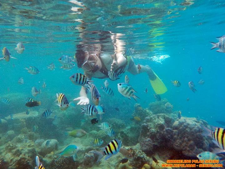 Snorkeling Pulau Seribu Dan Terumbu Karang