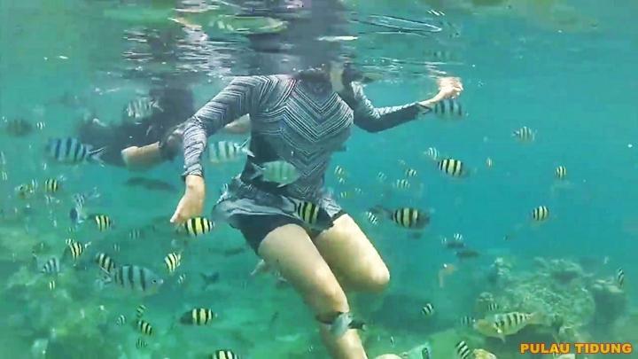 Snorkeling Pulau Tidung Wisata Pulau Seribu