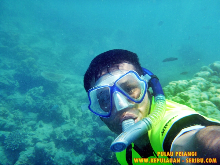 Terumbu Karang Pulau Pelangi Resort