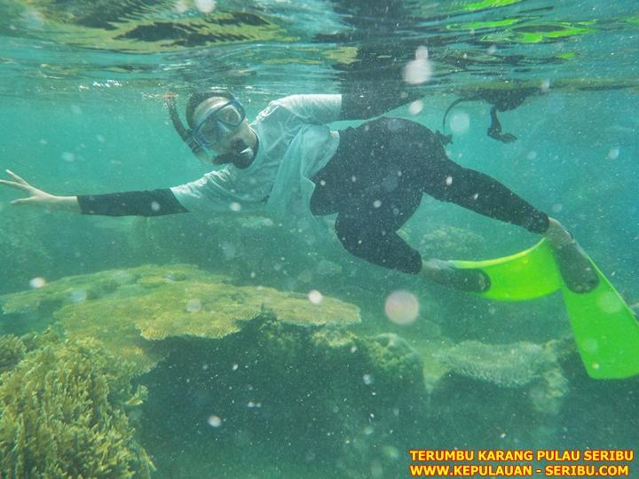 Snorkeling Dan Terumbu Karang Di Pulau Seribu jakarta
