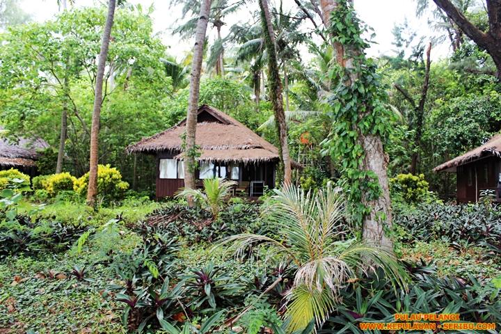 Pohon-pohon Rimba Yang lebat Di Pulau Pelangi
