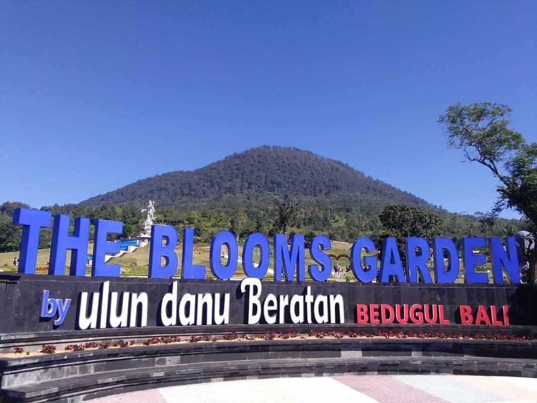 The Blooms Garden