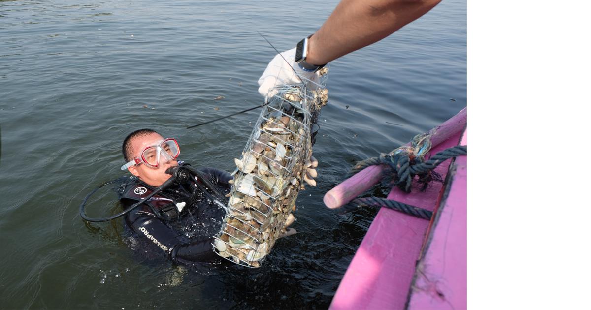 Proses peletakan kerang di laut @ Mona Destiana/GNFI